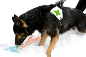 Avalanche Rescue Dog saves buried person